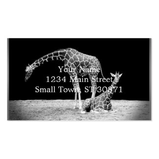 Black and White Giraffes Two Giraffes Pack Of Standard Business Cards