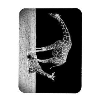 Black and White Giraffes Two Giraffes Rectangular Photo Magnet