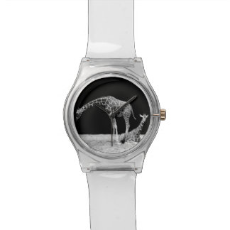 Black and White Giraffes Two Giraffes Wristwatch