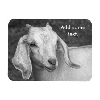 "Black And White Goat 3""x4"" Photo Magnet"