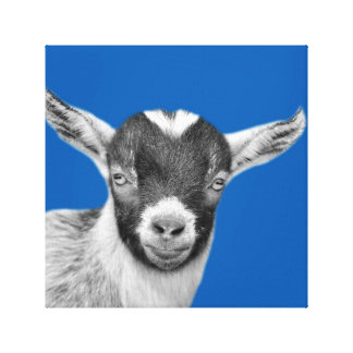 Black and white goat photography canvas print