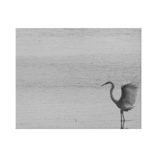 Black and white graceful bird wings photo stretched canvas prints