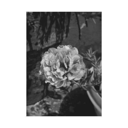 Black and white grey colour flowar photo canvas print
