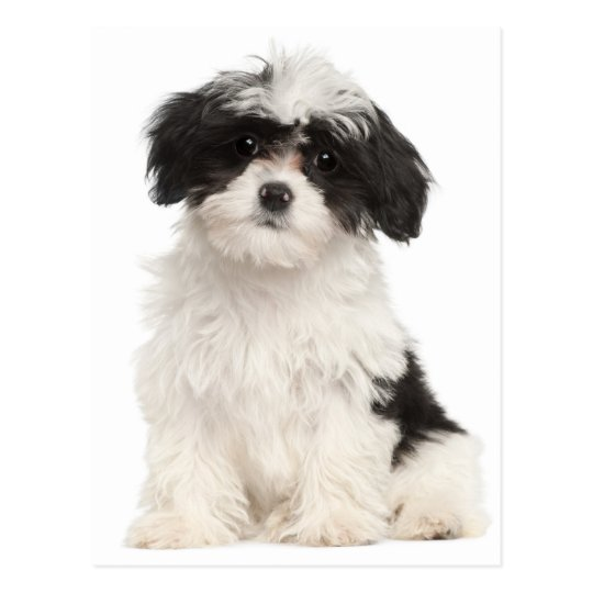 Havanese Magnet Cute Handmade Puppy Dog Gifts Accessories and Kitchen Home Decor