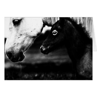Black and White Horses Greeting Card