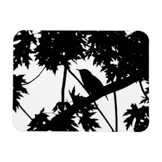 Black and White house Wren in a Maple Tree Magnets