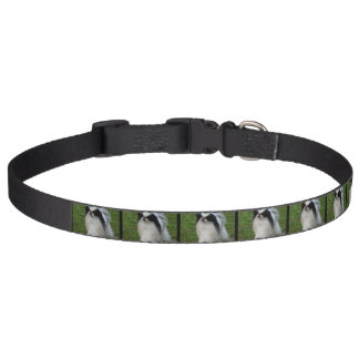Black and White Japanese Chin Pet Collar