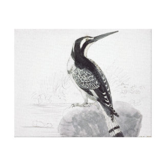 Black and White Kingfisher Stretched Canvas Prints