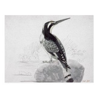 Black and White Kingfisher Postcard