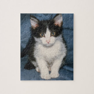 black and white kitten puzzle