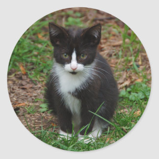 Black And White Kitten Stickers