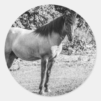Black and White Konik Horse Round Sticker