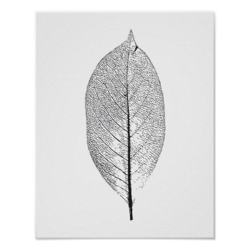 Black and White leaf poster