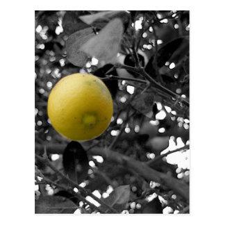 Black and White Lemon Postcard