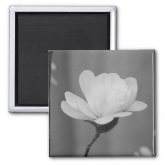 Black and White Magnolia Centennial Bloom Square Magnet