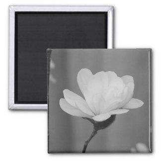 Black and White Magnolia Centennial Bloom Square Magnet