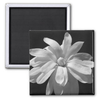 Black and White Magnolia Centennial Magnet