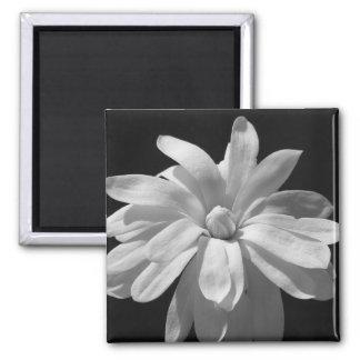 Black and White Magnolia Centennial Square Magnet