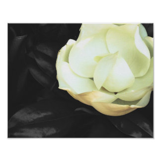 Black and White Magnolia Flower Poster