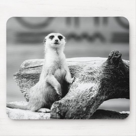 Black and White Meerkat On A Tree Mouse