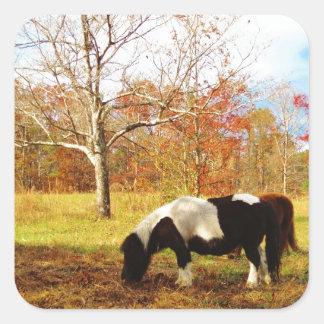 Black and White Miniature Pony / Horse Square Sticker
