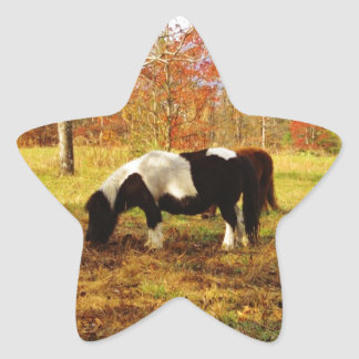 Black and White Miniature Pony / Horse Sticker