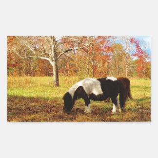 Black and White Miniature Pony Horse Rectangular Sticker