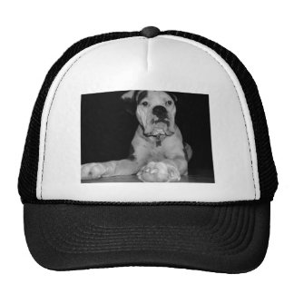 Black and White Noble Boxer Cap