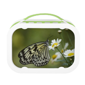 Black and White Nymph Butterfly Lunch Box