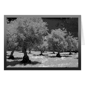 Black and white olive trees in Portugal Card