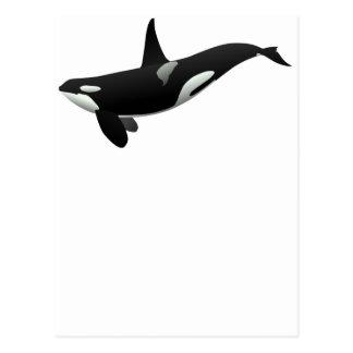 Black and White Orca Killer Whale Postcard