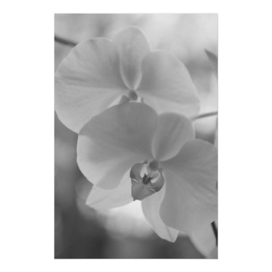 Black and White Orchids Poster