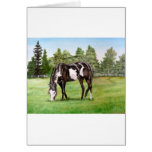 Black and White Paint horse/pony grazing in field Greeting Card