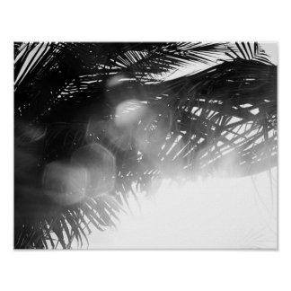 Black and White Palm Tree Beach Decor Photo Bokeh Poster