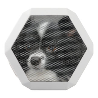 Black and White Papillon White Boombot Rex Bluetooth Speaker