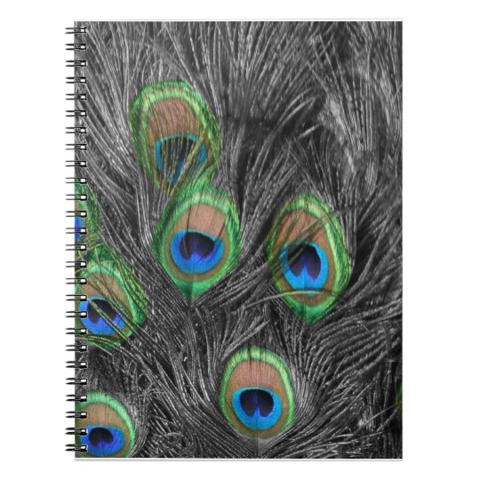 Black and White Peacock Feather Notebooks