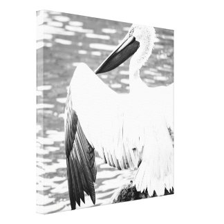 Black and White Pelican Bird Photography Stretched Canvas Prints