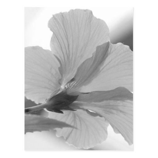 Black and White Petals Postcard