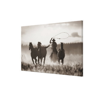Black and White photo of a Cowboy Lassoing Horses Canvas Print
