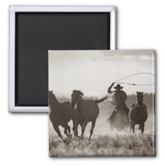 Black and White photo of a Cowboy Lassoing Horses Square Magnet