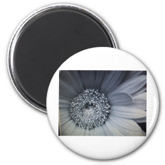 black and white photo of a flower fridge magnets