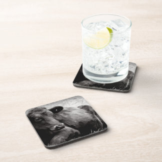 Black and White Photo of Black Angus Steer Drink Coaster