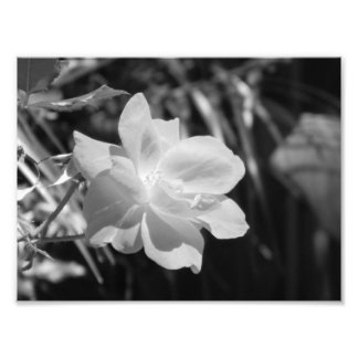 Black and White Photo Print