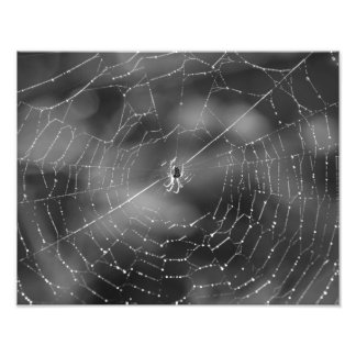 black and white photograph of a spider and web