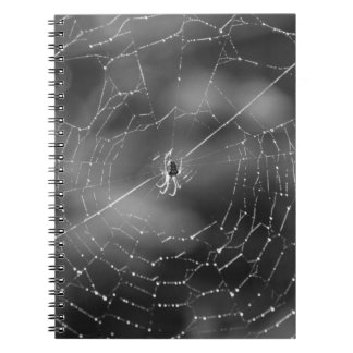 Black and white photograph of a spider and web notebooks