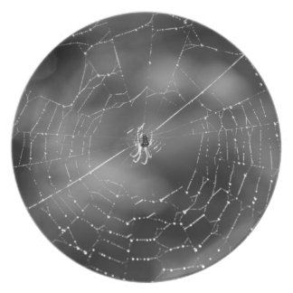 black and white photograph of a spider and web plates