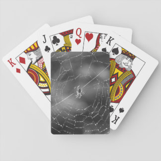 Black and white photograph of a spider and web playing cards