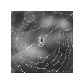 Black and white photograph of a spider and web stretched canvas print