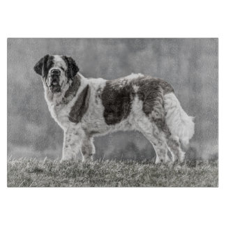 Black and white photograph of a St Bernard dog Cutting Board