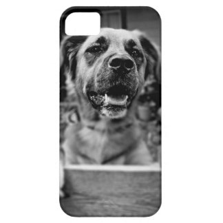 Black and White Photography Cute Dog iPhone 5 Covers